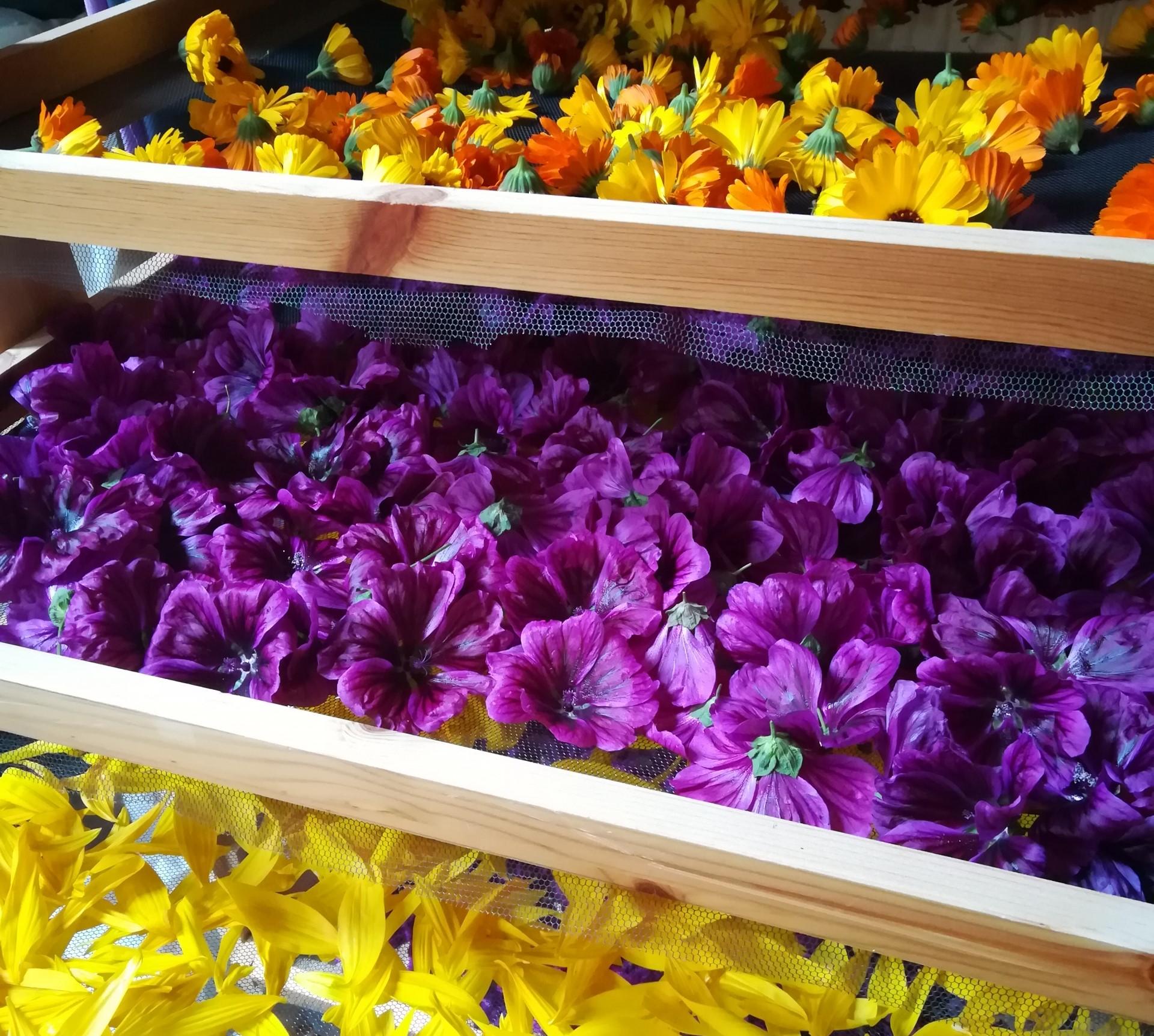 Blüten | Kräuter | handgeerntet