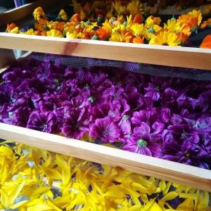 Blüten Kräutertee beim trocknen