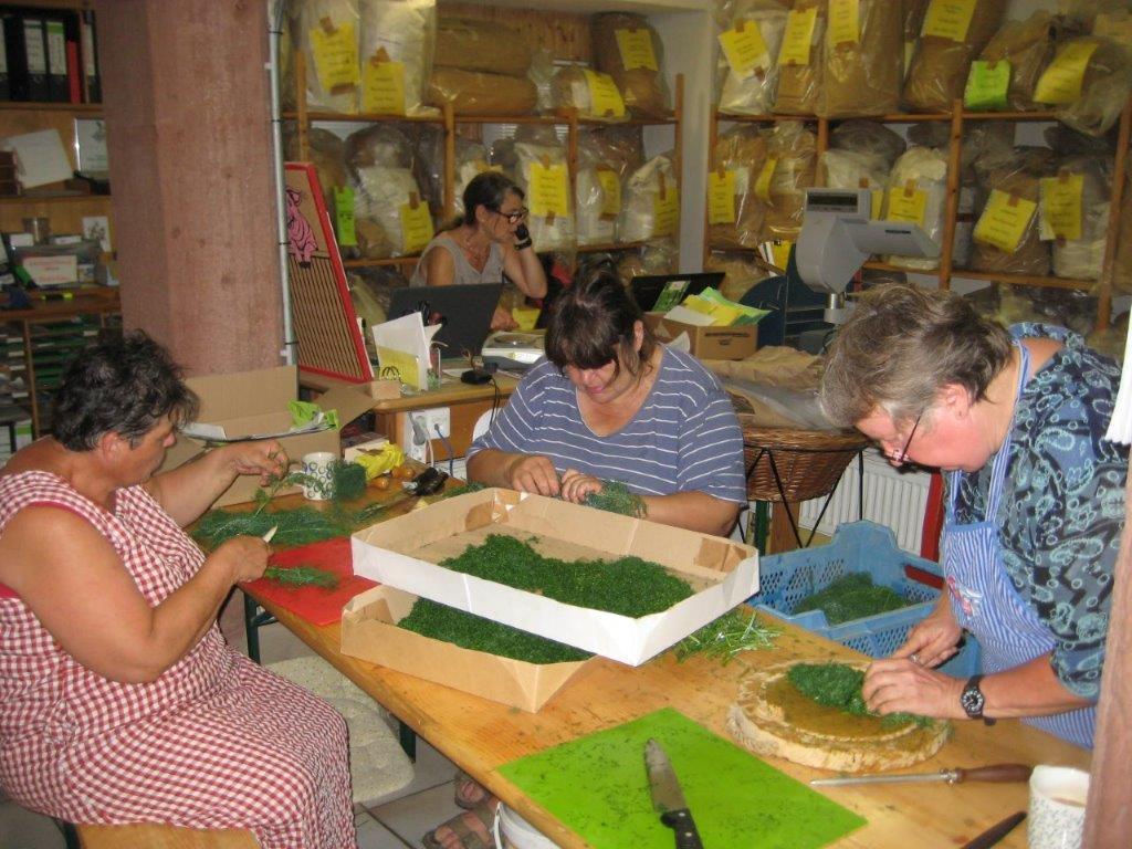 Kräuterfrauen arbeiten