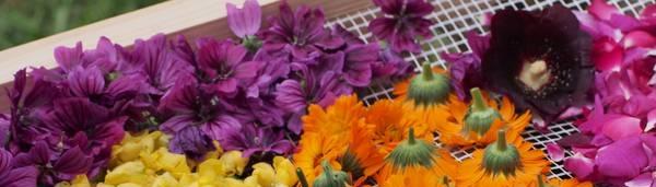 Blüten verschiedener Kräuter